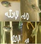 Ikan Bertuliskan La Ilaha Illallah